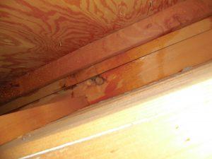 奈良県橿原市K様 屋根からの水漏れ1