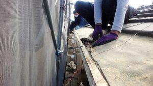 奈良県橿原市K様 雨漏り修理 瓦めくり3